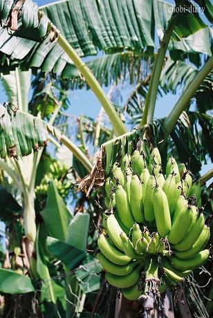 Banana_3